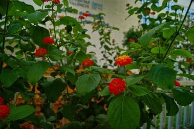 Family Flower
